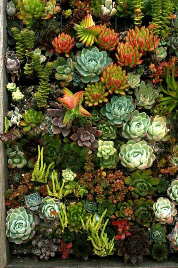 schöne Gartenideen garten bilder gartendekorationen sukkulenten