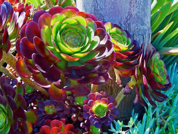 Dekorative Zimmerpflanzen - Pflegeleichte Topfpflanzen Bluhende Zimmerpflanzen Arten