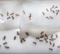 Ameisen bekämpfen im Haus und im Garten – Hausmittel gegen Ameisen