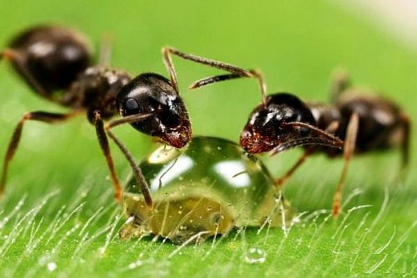 Ameisen garten haus hausmittel wohnung