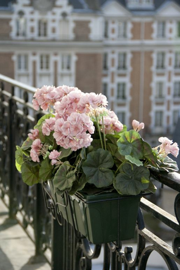 Balkonbepflanzung Ideen blassrosa