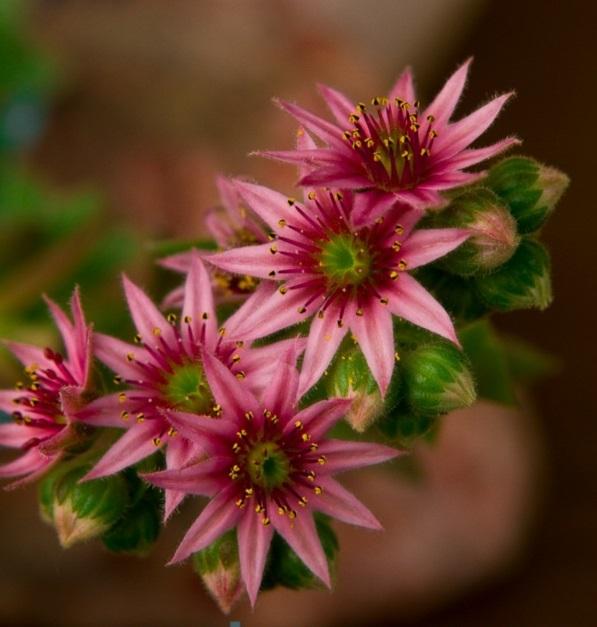 Balkonbepflanzung Ideen exotisch blüten