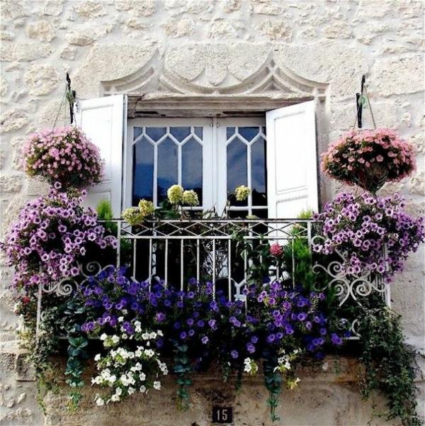 Balkonbepflanzung französische stil Ideen lila blüten