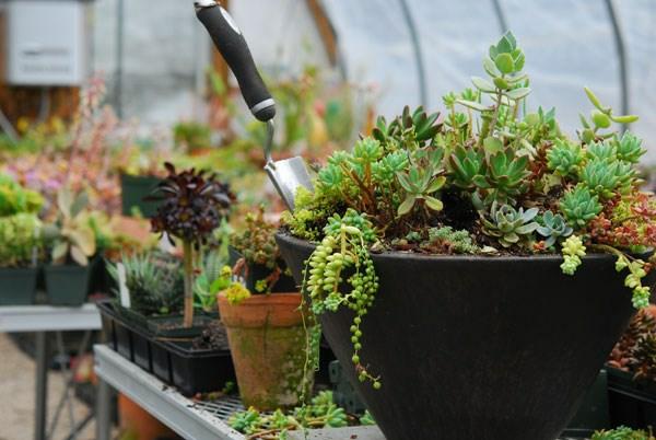 Container eye catching pflanzenlexikon pflanzen
