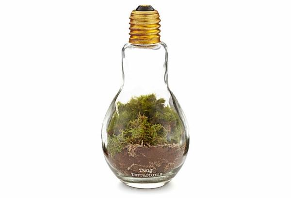 DIY-Deko-aus-Glühbirne-pflanzen-arten
