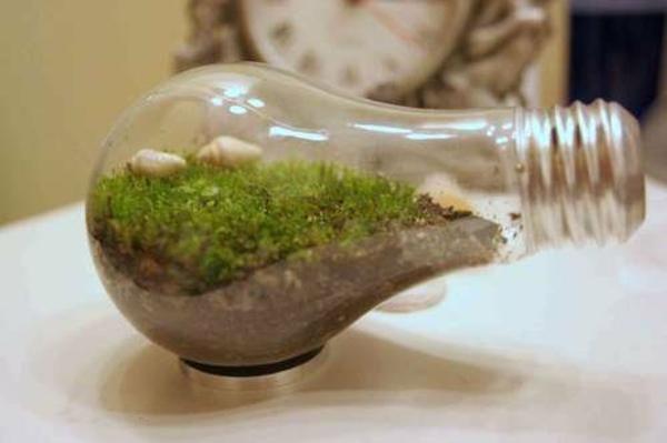 DIY Deko aus Glühbirnen moos blumen