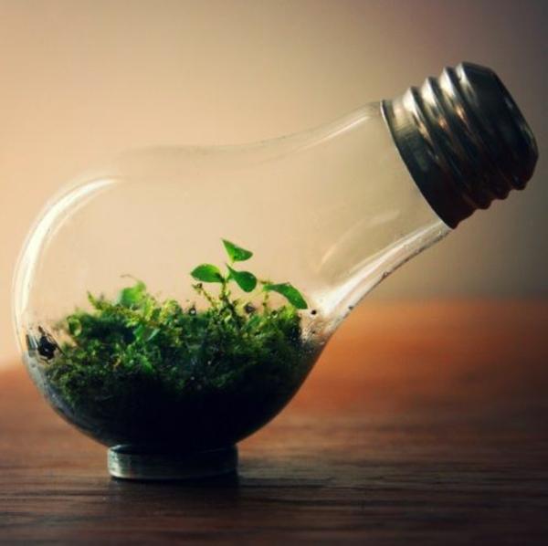 DIY Deko Glühbirnen naturhaft pflanzen