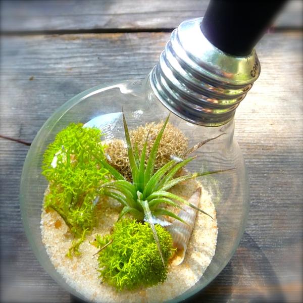 DIY Deko exotisch Glühbirnen sand moos