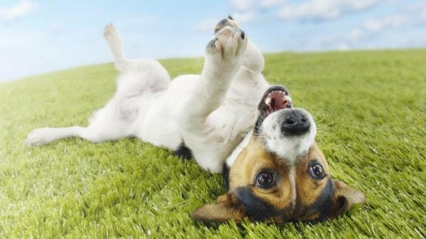 Flöhe in der Wohnung glücklich hund