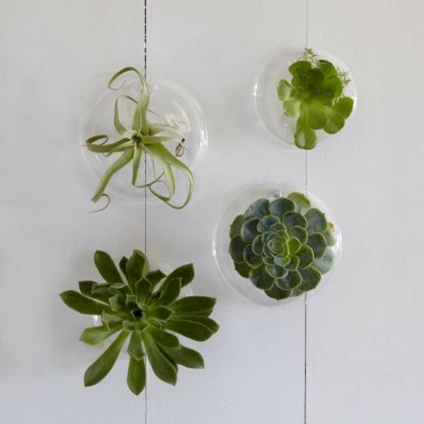 Grünpflanzen Bilder air pflanzen