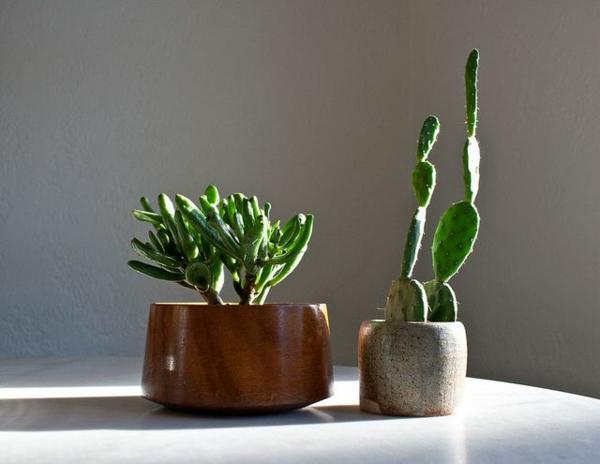 Grün pflanzen immergrün Bilder art modern sukkulenten