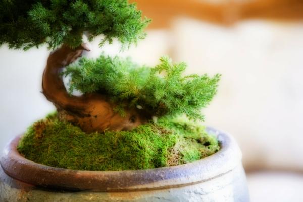 Grünpflanzen blumentopf ton Bilder art moos