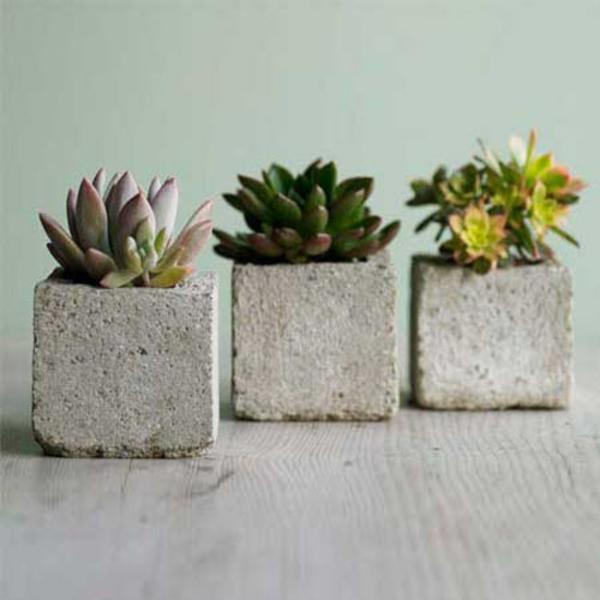 Grün pflanzen fleischige blätter Bilder beton blumentopf