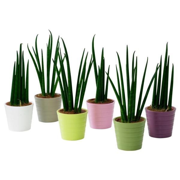 Grünpflanzen Bilder bunt matt