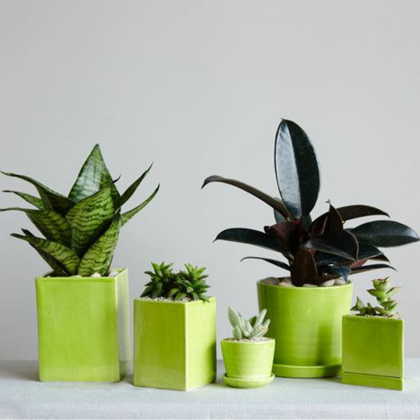 Grünpflanzen beliebte zimmerpflanzen Bilder geometrisch formen grün