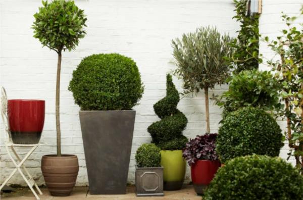 Grünpflanzen vielfalt Bilder groß klein blumentöpfe
