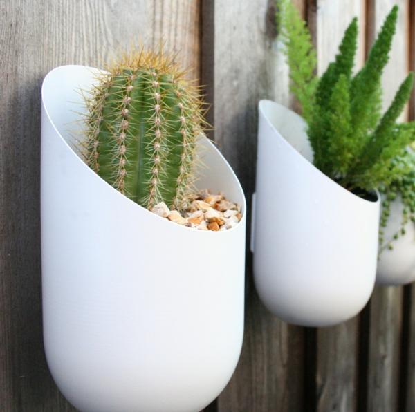 35 Grünpflanzen Bilder - Blühende Zimmerpflanzen Bluhende Zimmerpflanzen Arten
