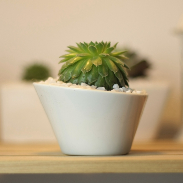 Grünpflanzen Bilder keramisch weiß glanz