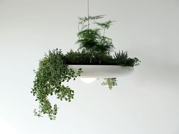 Grünpflanzen licht Bilder kronleuchter blumentopf design