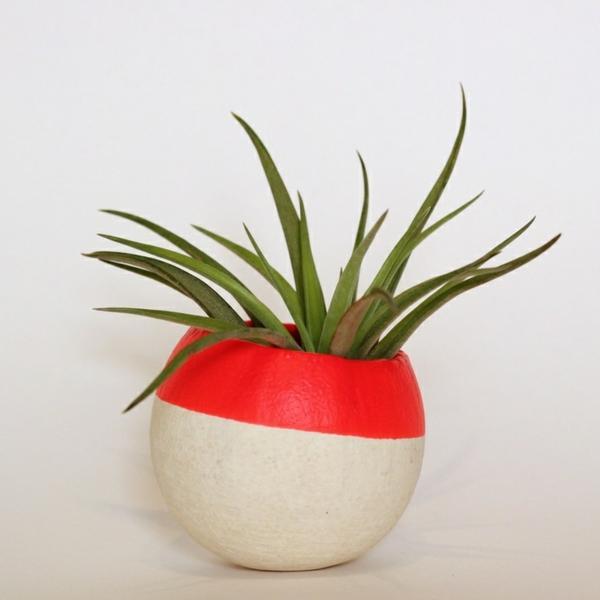Grünpflanzen dürrfest Bilder rund designer blumentopf