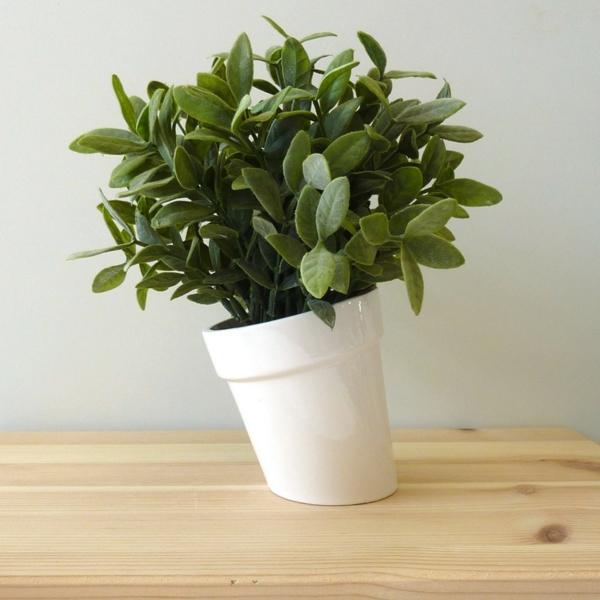 Grünpflanzen fleischig blätter Bilder schräg weiß blumentopf