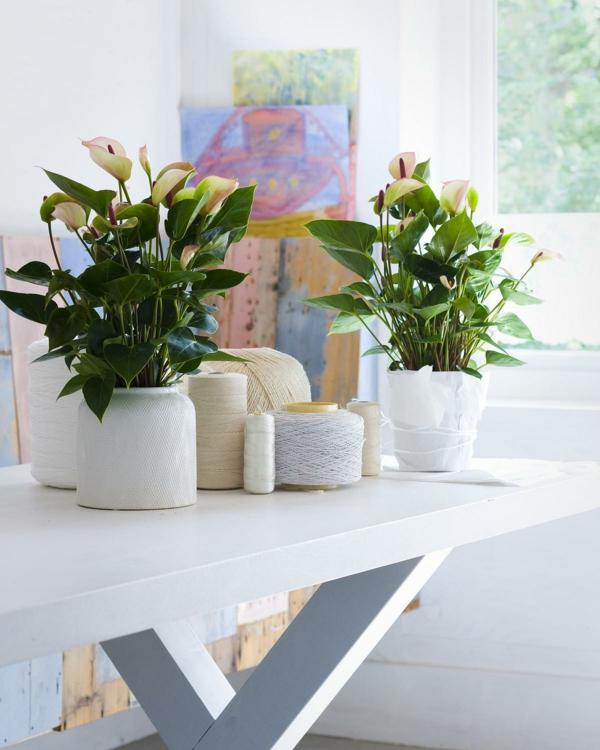 35 Grnpflanzen Bilder Blhende Zimmerpflanzen