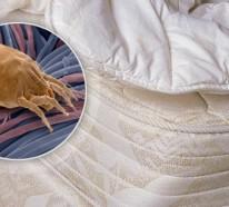 Was sind Milben? – Milben im Bett bekämpfen
