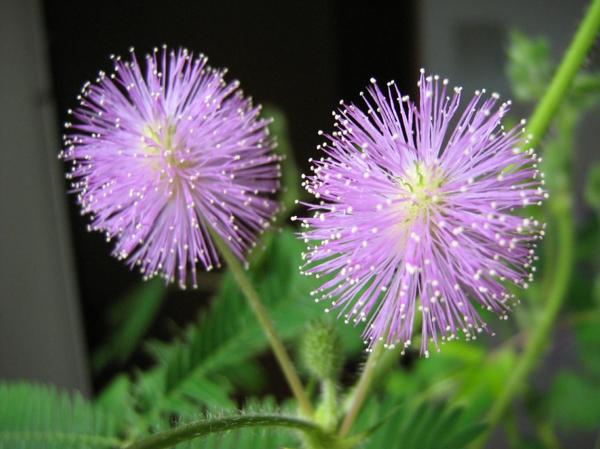 Dekorative zimmerpflanzen pflegeleichte topfpflanzen for Dekorative zimmerpflanzen