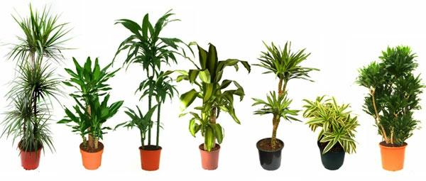 Topfpflanzen Pflegeleichte  blumentöpfe arten