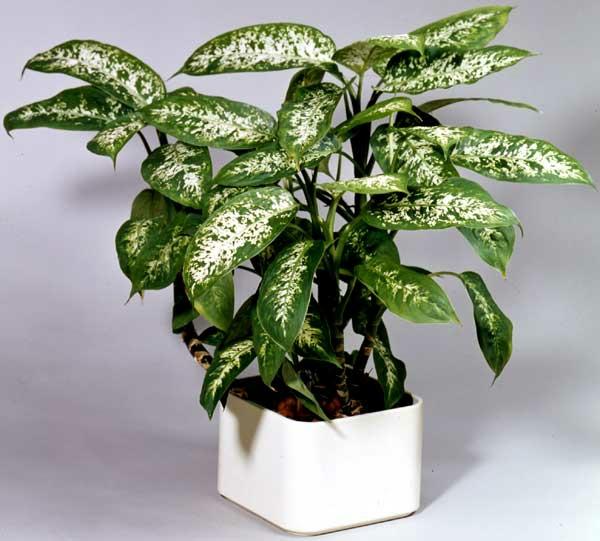 Pflegeleichte Topfpflanzen grün wenig licht