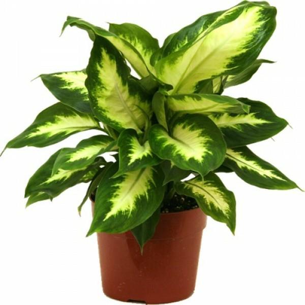 Pflegeleichte Topfpflanzen muster blätter