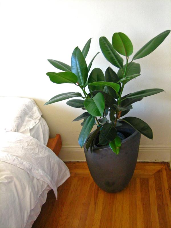 Pflegeleichte Topfpflanzen schlafzimmer blumen