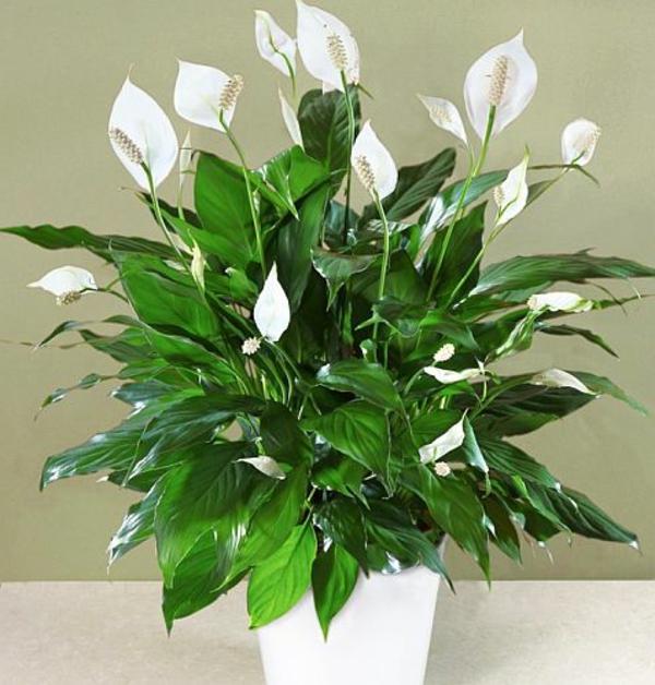pflegeleichte zimmerpflanzen im schlafzimmer sorgen f r