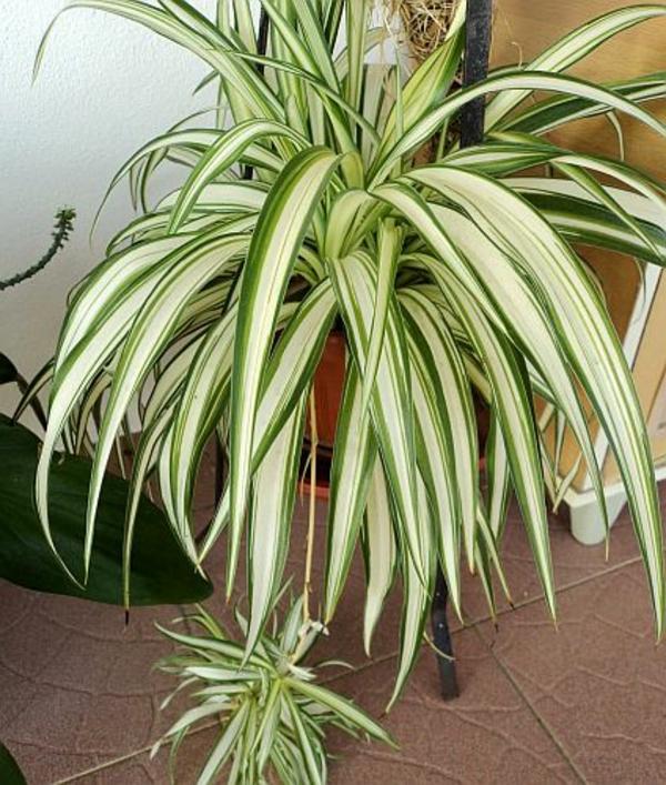 pflegeleichte zimmerpflanzen im schlafzimmer sorgen f r. Black Bedroom Furniture Sets. Home Design Ideas