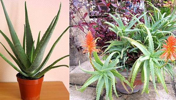 pflegeleichte zimmerpflanzen im schlafzimmer sorgen für ruhigen schlaf