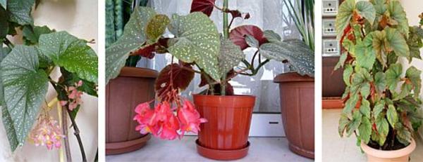 Pflegeleichte Zimmerpflanzen schlafzimmer idee