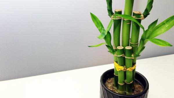 feng shui regeln elemente einrichtungsideen zimmerpflanzen bambus