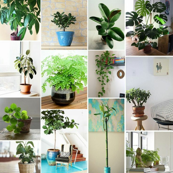Feng shui zimmerpflanzen feng shui bilder erfahren sie - Feng shui pflanzen schlafzimmer ...