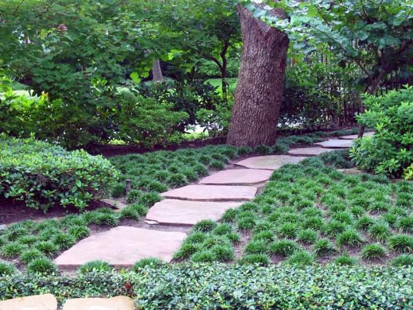 pflanzenlexikon Mondo gras bäume