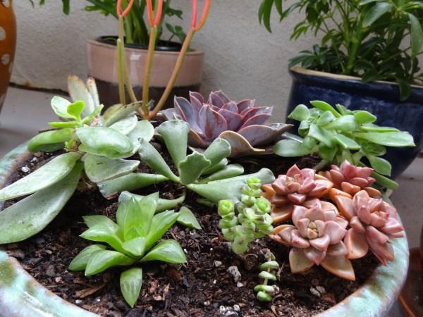 gartendesign pflanzenlexikon  schöne pflanzen