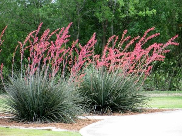 Gartengestaltung Grüner Garten Gestalten Pflegeleichte Gartenpflanzen  Sommer Pflanzen