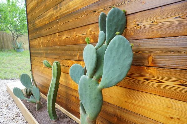 gartengestaltung ideen pflegeleichte gartenpflanzen hitzebeständig kaktus pflege