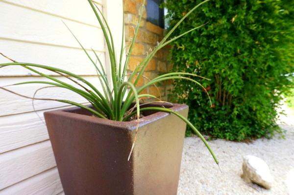 gartengestaltung pflegeleichte gartenpflanzen hitzebeständig kübelpflanzen
