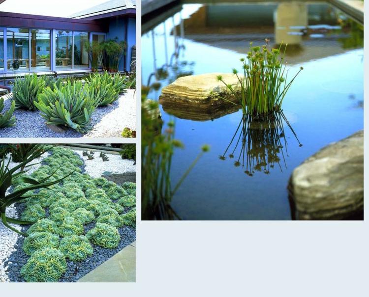 gartengestaltung und landschaftsbau anthony paul gartenideen sukkulenten wasserpflanzen