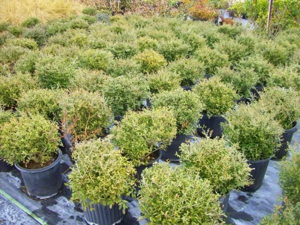 gartengestaltung und landschaftsbau pflegeleichte  gartenpflanzen einpflanzen gartenideen