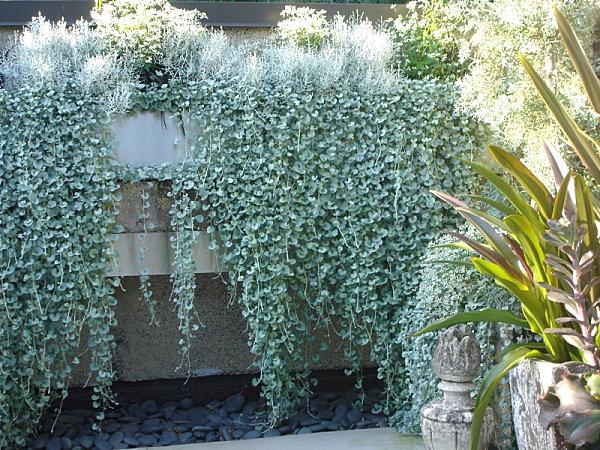 Pflegeleichte Gartenpflanzen Fur Den Sommer