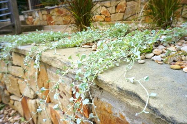 gartengestaltung und landschaftsbau pflegeleichte gartenpflanzen hitzefest