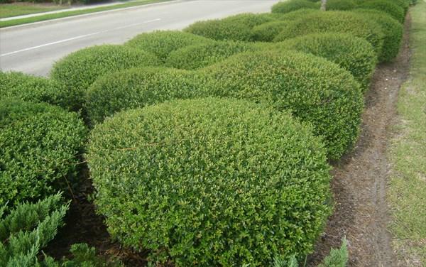 gartengestaltung und landschaftsbau pflegeleichte gartenpflanzen lebendiger gartenzaun hecke