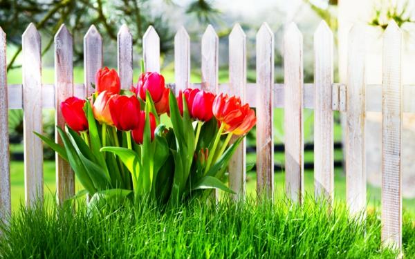 gartenzaun bauen gartensichtschutz garten gestalten pflanzen tulpen