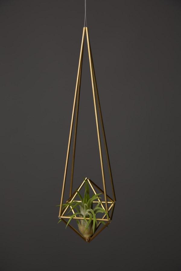 hängende pflanzen hängepflanzen balkon zimmerpflanzen Himelli diamond